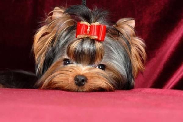 Где в Ростове-на-Дону есть паримахерские для собак и кошек?