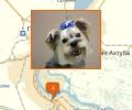 Где в Волгограде есть паримахерские для собак и кошек?