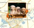 Где осуществляют дрессировку собак в Ростове-на-Дону?