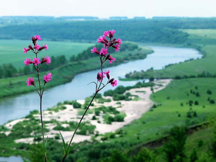 Где находятся охраняемые памятники природы в Ростове-на-Дону?