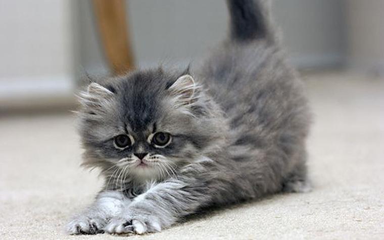 Где купить котенка в Ростове-на-Дону?