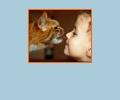Где находятся ветеринарные клиники в Симферополе?