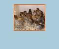 Где расположены крупные птицефабрики Ростова-на-Дону?
