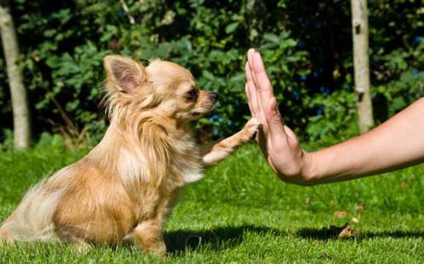 Где осуществляют дрессировку собак в Краснодаре?