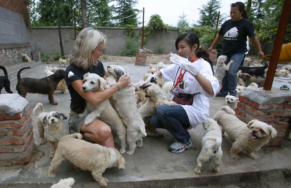 Где расположены приюты для животных в Краснодаре?