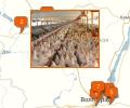 Где расположены крупные птицефабрики Волгограда?