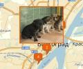 Где расположены приюты для животных в Волгограде?