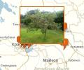 В каких питомниках купить сортовые деревья в Краснодаре?