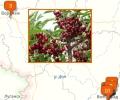 В каких питомниках купить сортовые деревья в Волгограде?
