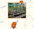 Где продают саженцы в Волгограде?
