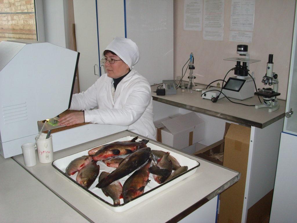 Где находятся ветеринарные лаборатории в Ростове-на-Дону?