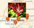 Где купить экзотические цветы в Краснодаре?